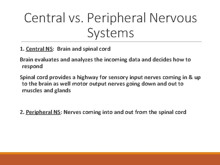 Central vs. Peripheral Nervous Systems 1. Central NS: Brain and spinal cord Brain evaluates