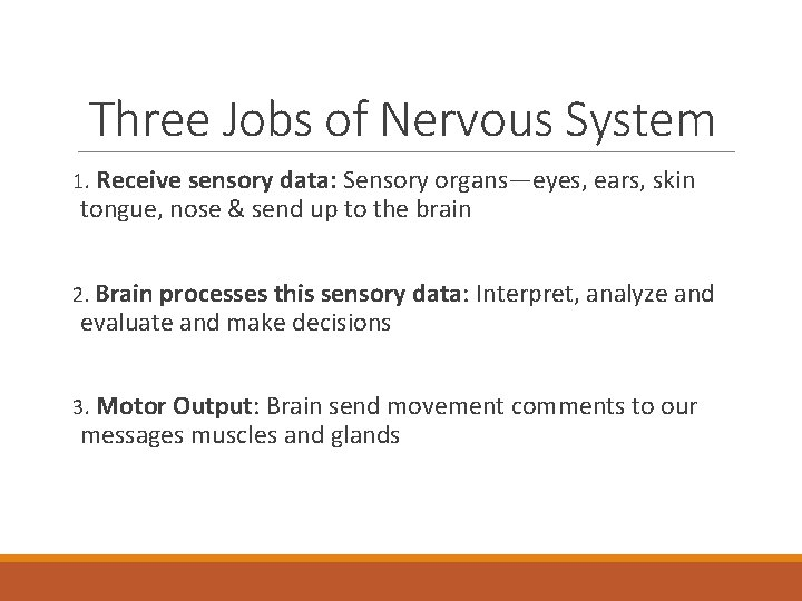 Three Jobs of Nervous System 1. Receive sensory data: Sensory organs—eyes, ears, skin tongue,