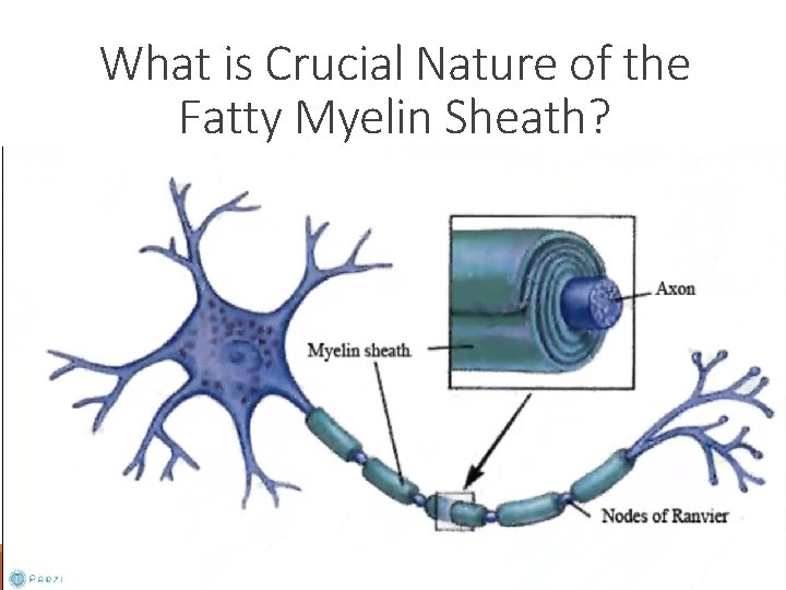 What is Crucial Nature of the Fatty Myelin Sheath?