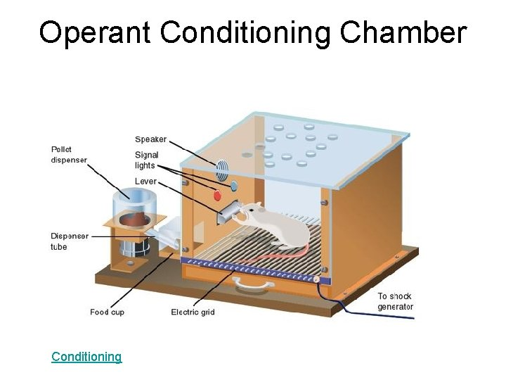 Operant Conditioning Chamber Conditioning
