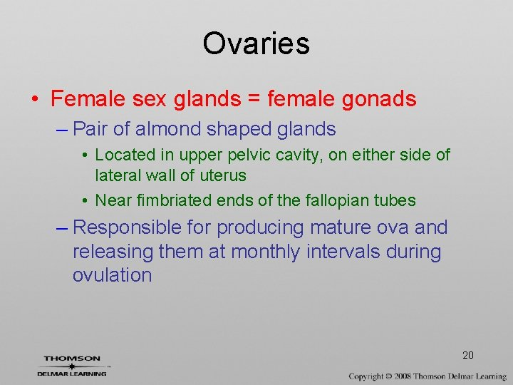 Ovaries • Female sex glands = female gonads – Pair of almond shaped glands