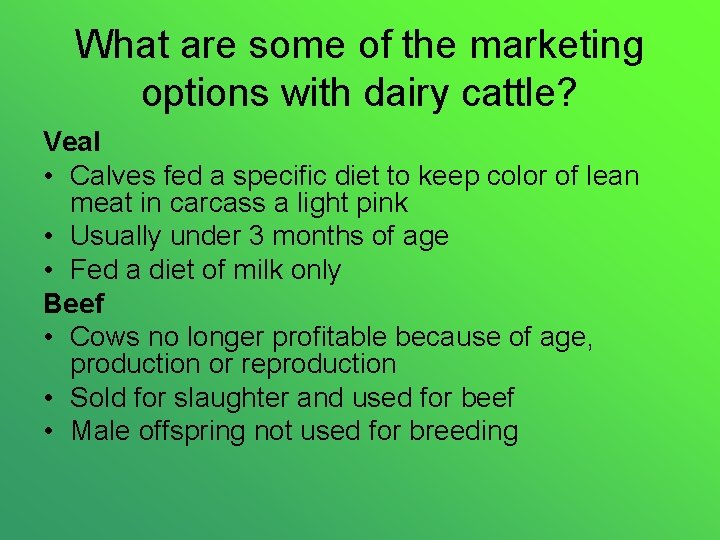What are some of the marketing options with dairy cattle? Veal • Calves fed