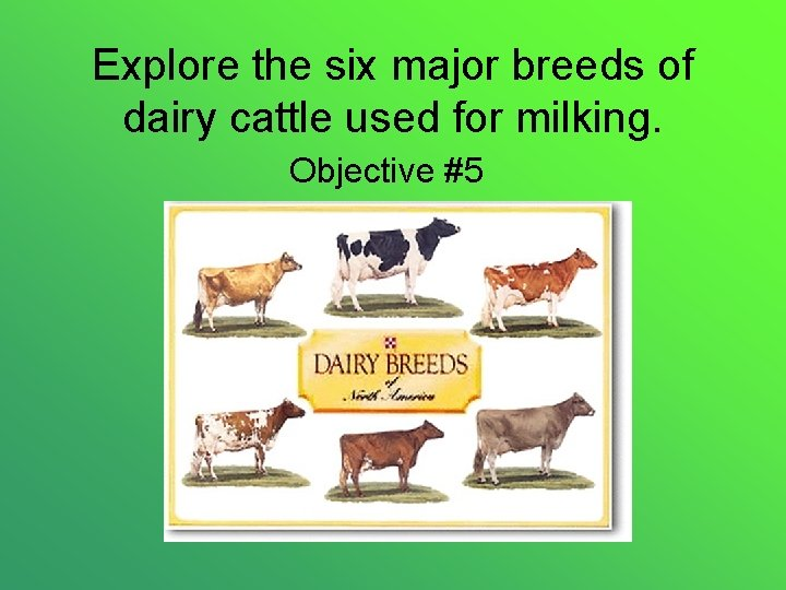 Explore the six major breeds of dairy cattle used for milking. Objective #5