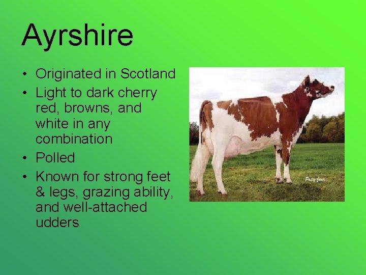 Ayrshire • Originated in Scotland • Light to dark cherry red, browns, and white