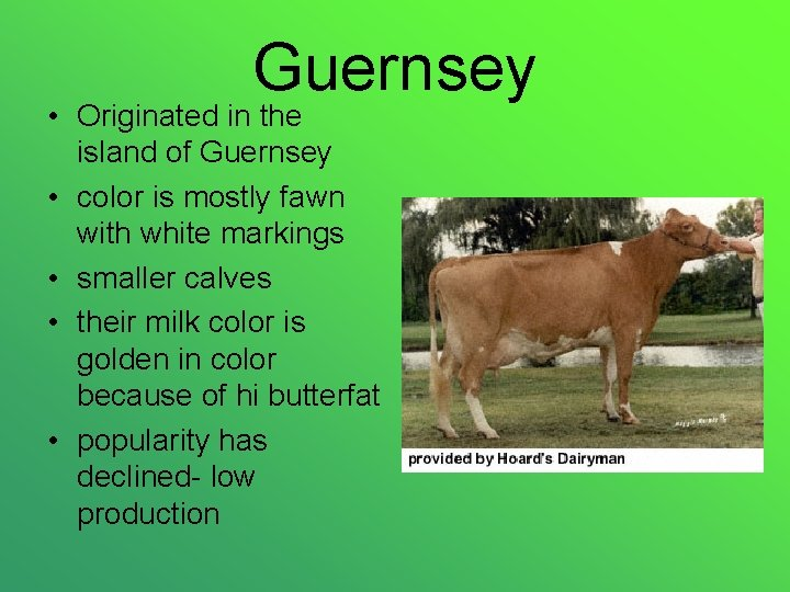Guernsey • Originated in the island of Guernsey • color is mostly fawn with