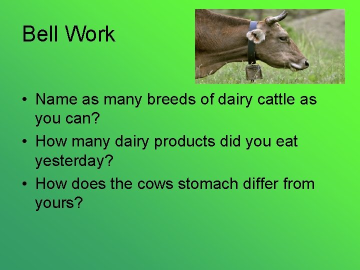 Bell Work • Name as many breeds of dairy cattle as you can? •