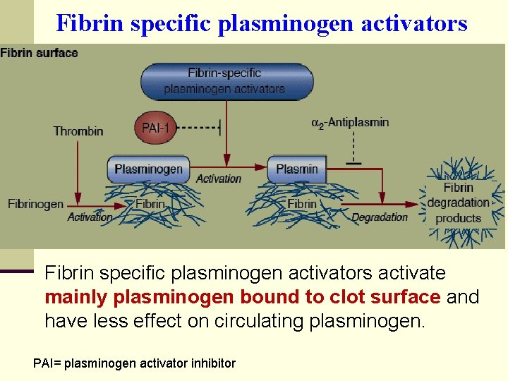 Fibrin specific plasminogen activators activate mainly plasminogen bound to clot surface and have less