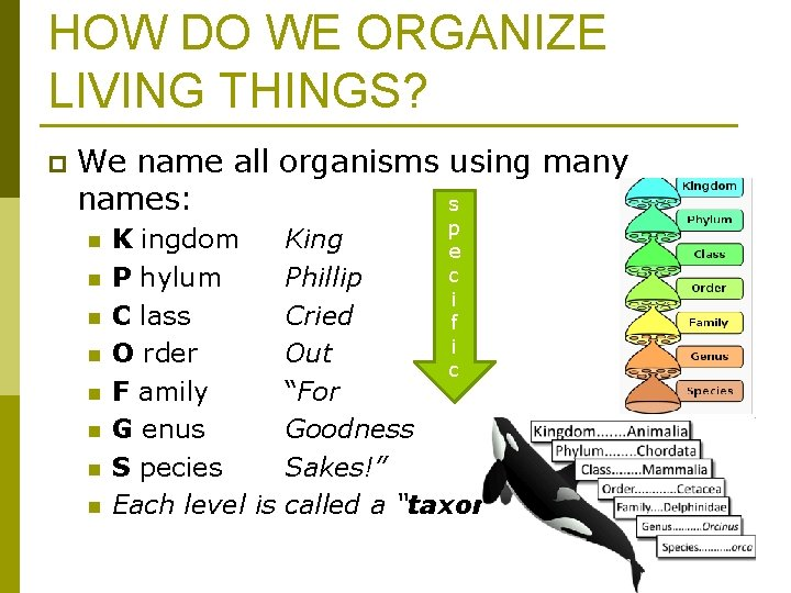 HOW DO WE ORGANIZE LIVING THINGS? p We name all organisms using many names: