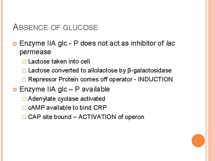 ABSENCE OF GLUCOSE Enzyme IIA glc - P does not act as inhibitor of
