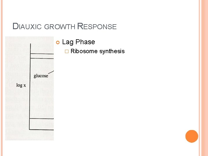 DIAUXIC GROWTH RESPONSE Lag Phase � Ribosome synthesis