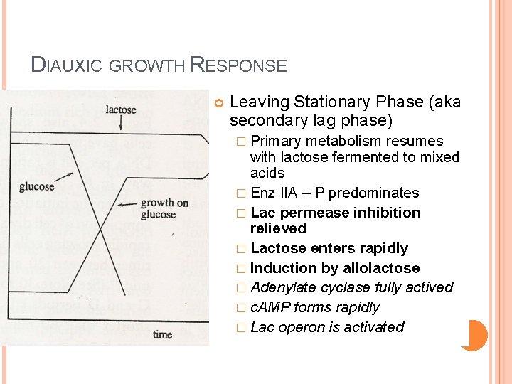 DIAUXIC GROWTH RESPONSE Leaving Stationary Phase (aka secondary lag phase) � Primary metabolism resumes