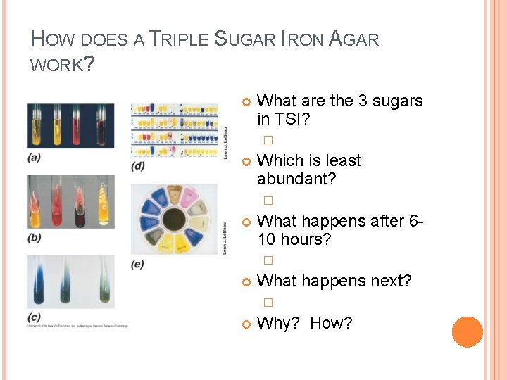 HOW DOES A TRIPLE SUGAR IRON AGAR WORK? What are the 3 sugars in