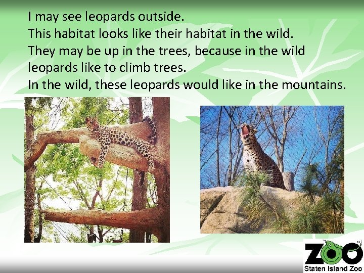 I may see leopards outside. This habitat looks like their habitat in the wild.