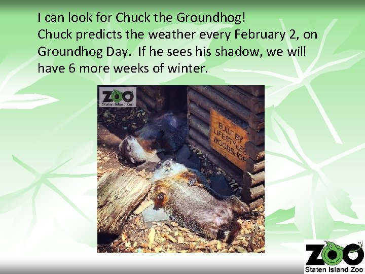 I can look for Chuck the Groundhog! Chuck predicts the weather every February 2,