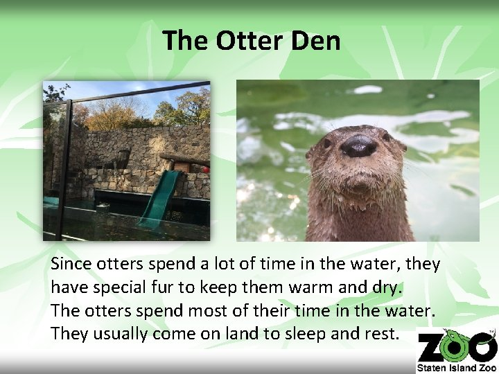 The Otter Den Since otters spend a lot of time in the water, they