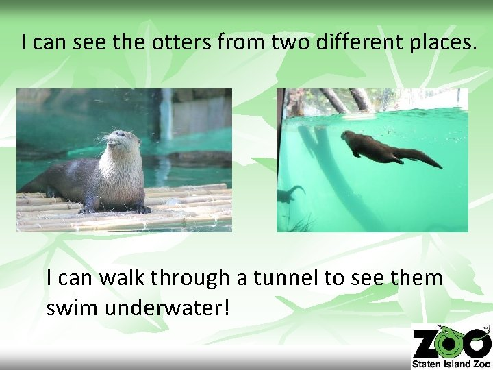 I can see the otters from two different places. I can walk through a