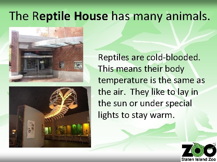 The Reptile House has many animals. Reptiles are cold-blooded. This means their body temperature