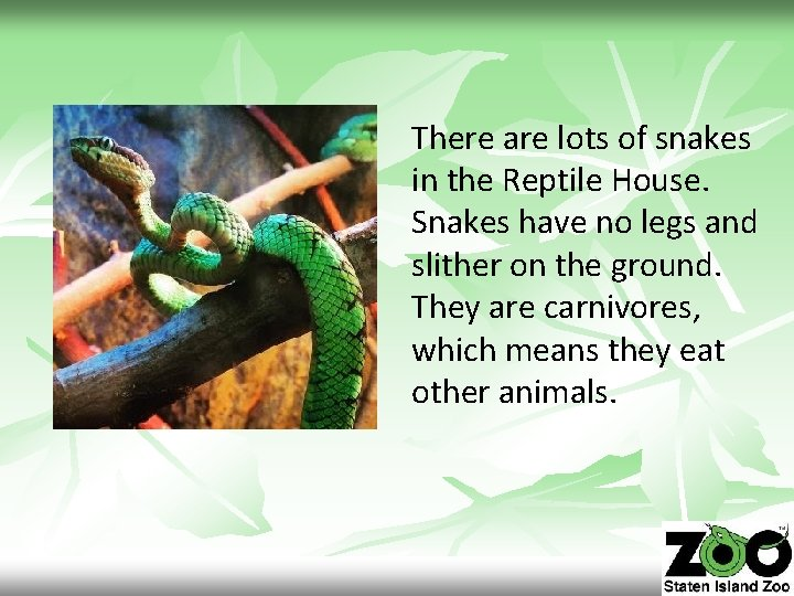 There are lots of snakes in the Reptile House. Snakes have no legs and