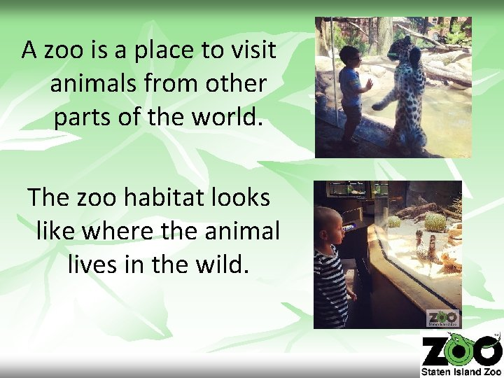 A zoo is a place to visit animals from other parts of the world.