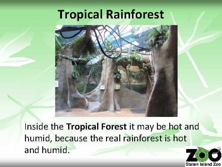 Tropical Rainforest Inside the Tropical Forest it may be hot and humid, because the