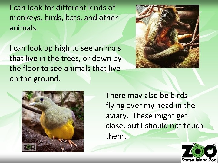 I can look for different kinds of monkeys, birds, bats, and other animals. I