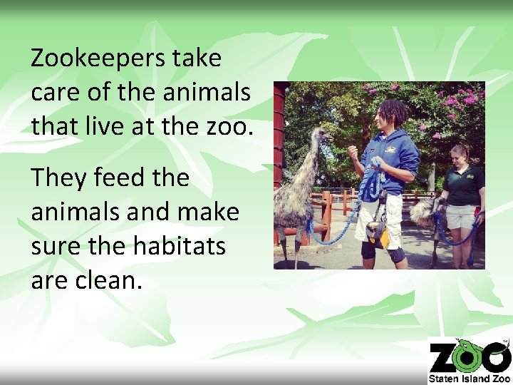 Zookeepers take care of the animals that live at the zoo. They feed the