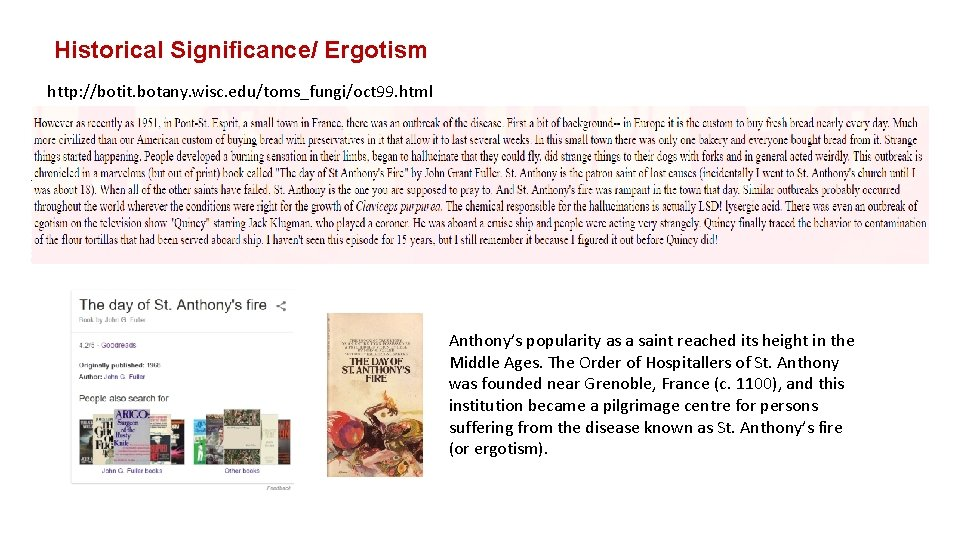 Historical Significance/ Ergotism http: //botit. botany. wisc. edu/toms_fungi/oct 99. html Anthony's popularity as a
