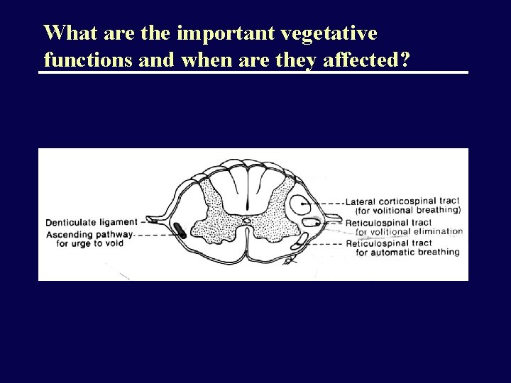 What are the important vegetative functions and when are they affected?
