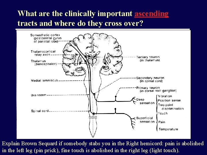 What are the clinically important ascending tracts and where do they cross over? Explain