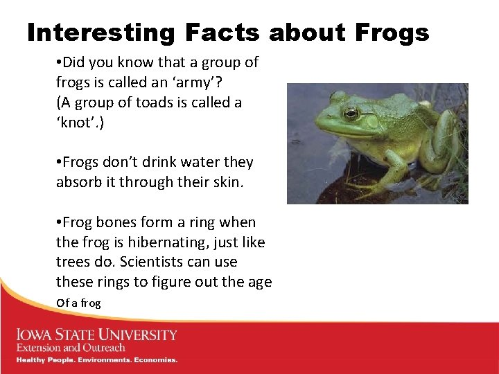 Interesting Facts about Frogs • Did you know that a group of frogs is