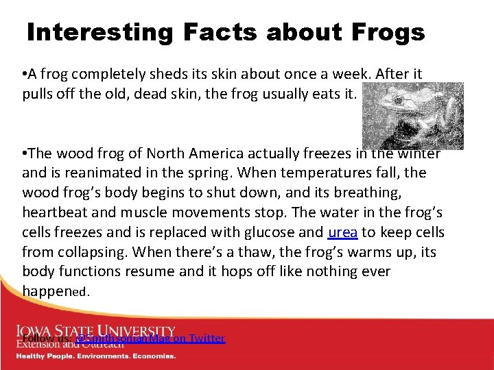 Interesting Facts about Frogs • A frog completely sheds its skin about once a