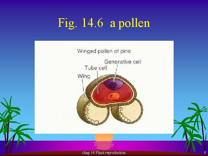 Fig. 14. 6 a pollen chap. 14 Plant reproduction 9
