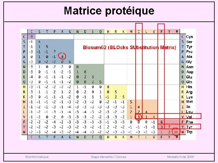 Matrice protéique Bioinformatique Stage Marseille / Cannes Mostafa Kriat 2008