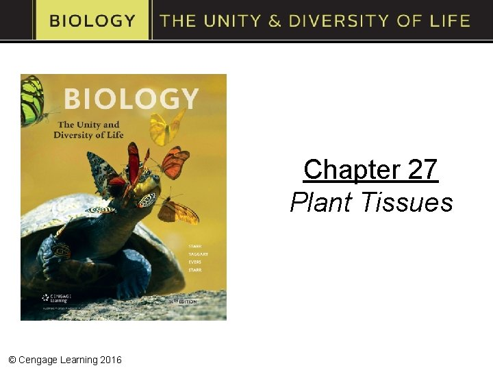 Chapter 27 Plant Tissues © Cengage Learning 2016