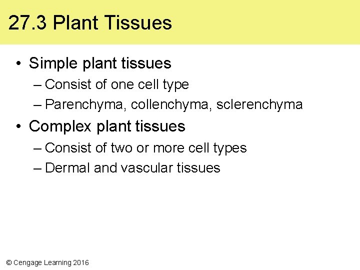 27. 3 Plant Tissues • Simple plant tissues – Consist of one cell type