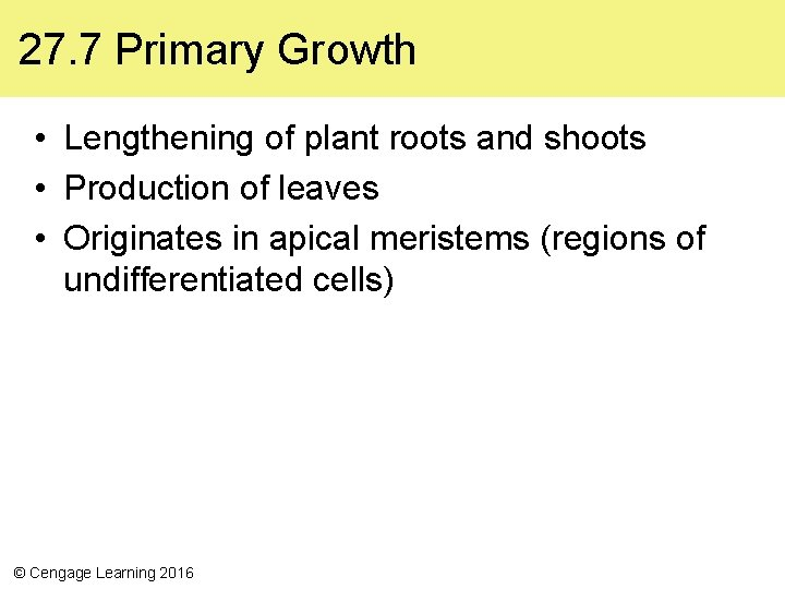 27. 7 Primary Growth • Lengthening of plant roots and shoots • Production of