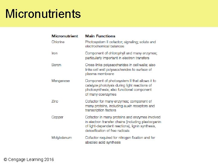 Micronutrients © Cengage Learning 2016