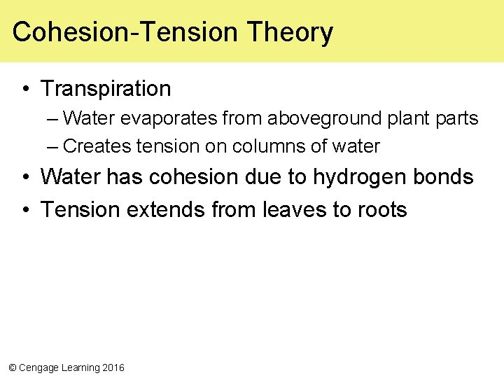 Cohesion-Tension Theory • Transpiration – Water evaporates from aboveground plant parts – Creates tension