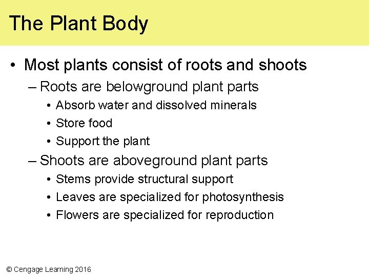 The Plant Body • Most plants consist of roots and shoots – Roots are