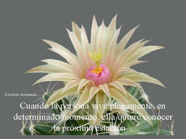 Escobaria wissmannii Cuando la persona vive plenamente, en determinado momento, ella quiere conocer la