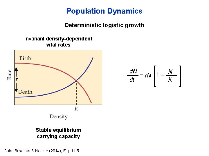 Population Dynamics Deterministic logistic growth Invariant density-dependent vital rates d. N N 1 –