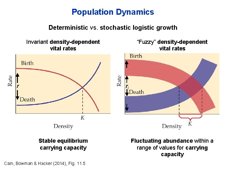 """Population Dynamics Deterministic vs. stochastic logistic growth Invariant density-dependent vital rates r """"Fuzzy"""" density-dependent"""
