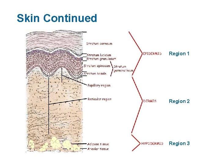 Skin Continued Region 1 Region 2 Region 3