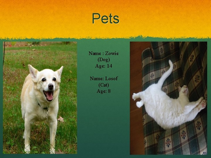 Pets Name : Zowie (Dog) Age: 14 Name: Losof (Cat) Age: 8