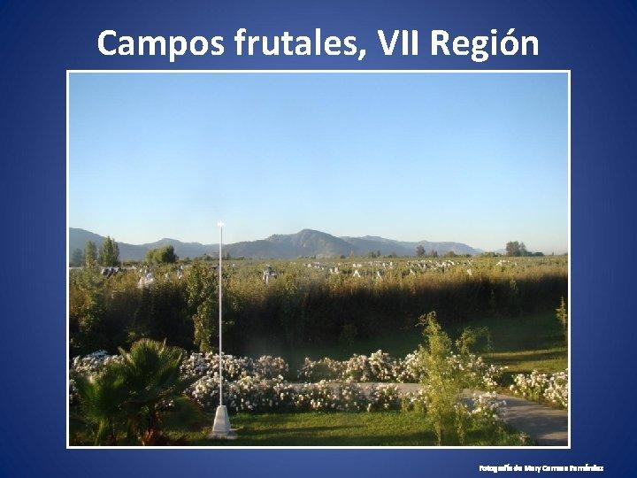 Campos frutales, VII Región Fotografía de Mary Carmen Fernández