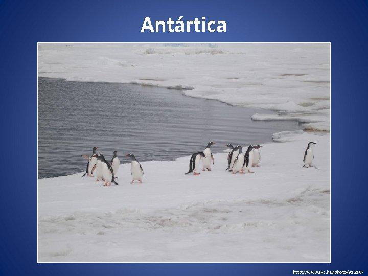 Antártica http: //www. sxc. hu/photo/912167
