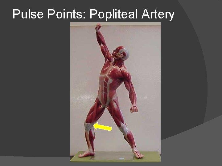 Pulse Points: Popliteal Artery