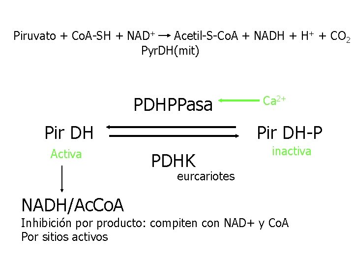 Piruvato + Co. A-SH + NAD+ Acetil-S-Co. A + NADH + H+ + CO
