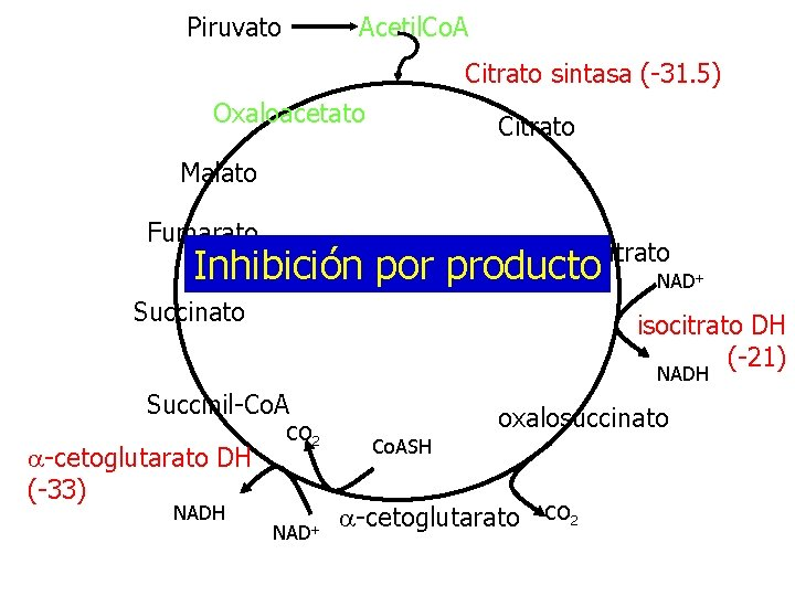 Piruvato Acetil. Co. A Citrato sintasa (-31. 5) Oxaloacetato Citrato Malato Fumarato isocitrato Inhibición