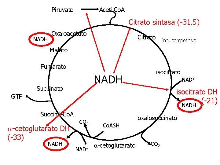 Piruvato Acetil. Co. A Citrato sintasa (-31. 5) NADH Oxaloacetato Citrato Inh. competitivo Malato